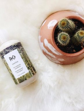 R+CO, cactus, barney martin, hair , product